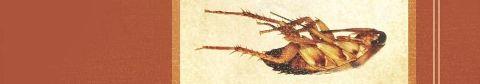 killing cockroaches by tony morgan