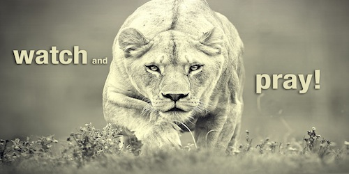Watch and Pray Wallpaper - Lioness