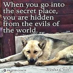 Hidden From Evil - Trisha Cwir