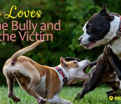 Love the Bully and Victim-bg