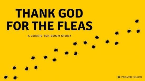 thank god for the fleas